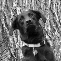 Rachel's dog, Tango