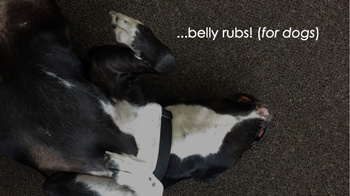 Belly rubs for dogs!
