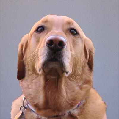 Poli the Dog