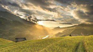sun shining through clouds on a rice field
