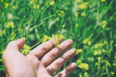 hand brushing wildflowers