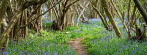 path in blue flower meadow with trees