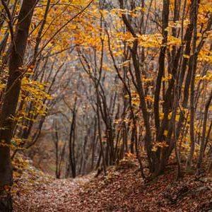 path through forest in autumn
