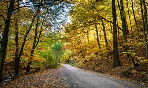 road in yellow forest