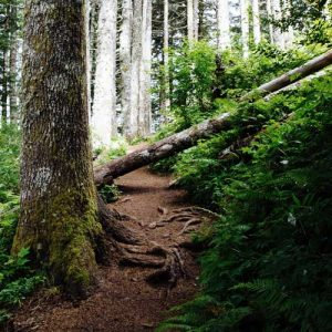 forest path with a fallen tree