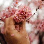 hand holding pink tree petals