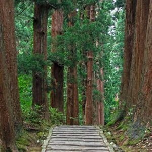 wooden path in green forest