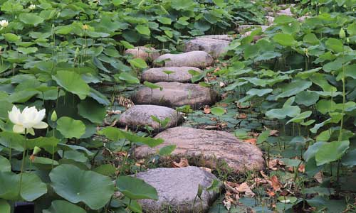 stone path on lily pads
