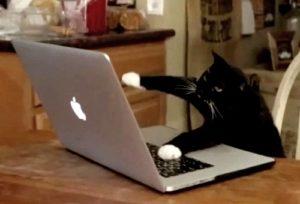 cat banging on keyboard