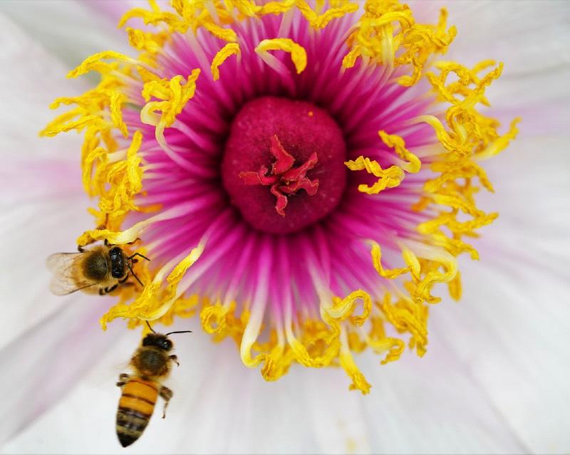 flower 5123954 1280 2