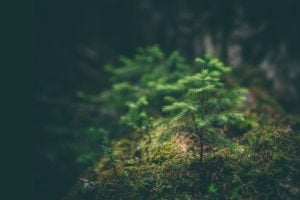 tree sprouting in forest